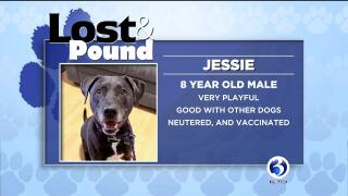 Lost And Pound | wfsb com