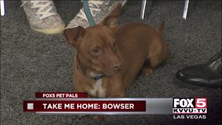 Pet Pals | fox5vegas com